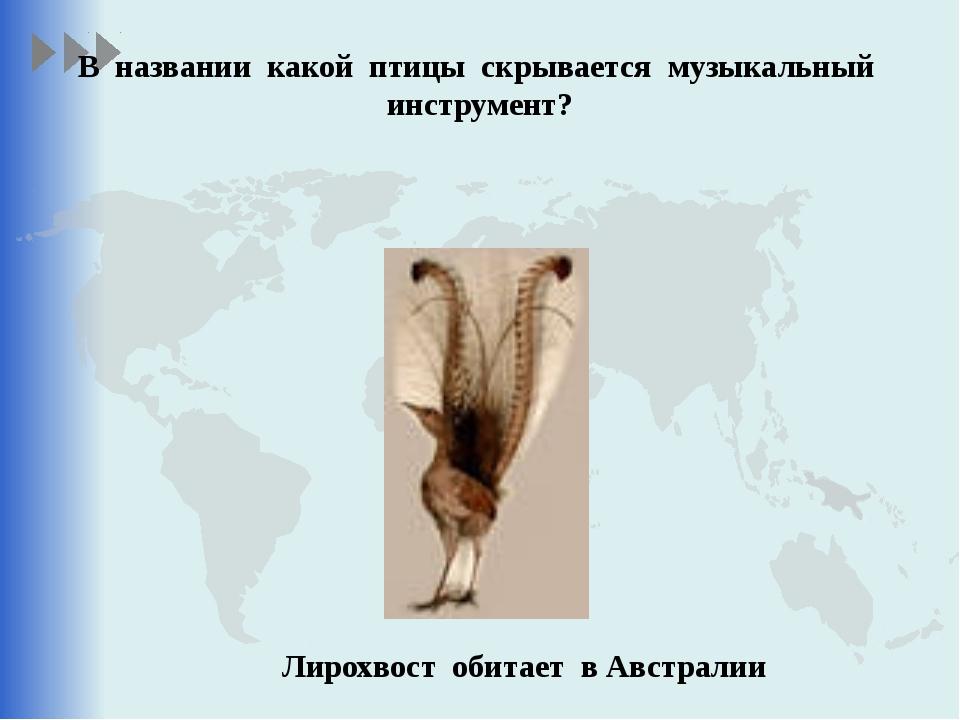 В названии какой птицы скрывается музыкальный инструмент? Лирохвост обитает в...