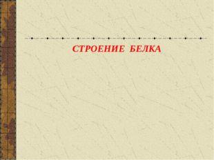 СТРОЕНИЕ БЕЛКА