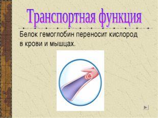 Белок гемоглобин переносит кислород в крови и мышцах.