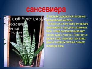 сансевиера В листьях содержатся сапогенин, органические кислоты. Теплый сок и
