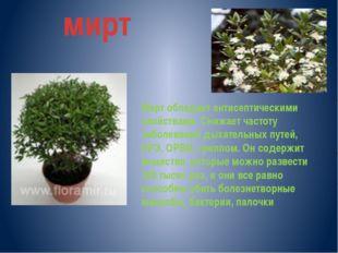 мирт Мирт обладает антисептическими свойствами. Снижает частоту заболеваний д