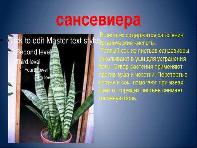 сансевиера В листьях содержатся сапогенин, органические кислоты. Теплый сок и...