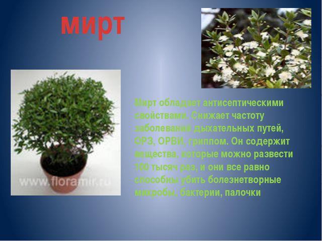 мирт Мирт обладает антисептическими свойствами. Снижает частоту заболеваний д...
