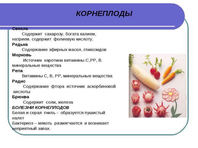 КОРНЕПЛОДЫ Свекла Содержит сахарозу. богата калием, натрием. содержит фолиеву...