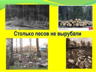 Столько лесов не вырубали