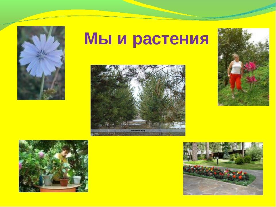 Мы и растения