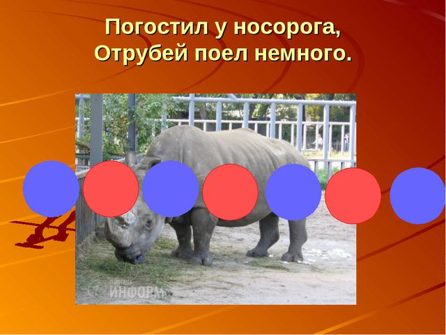 Погостил у носорога, Отрубей поел немного.