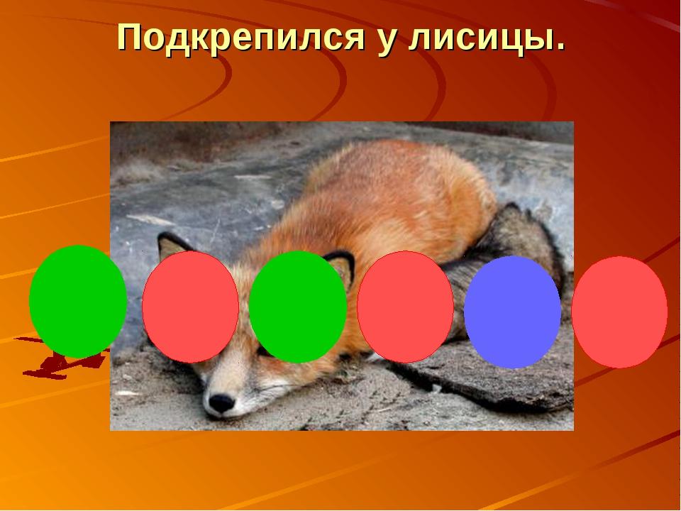 Подкрепился у лисицы.