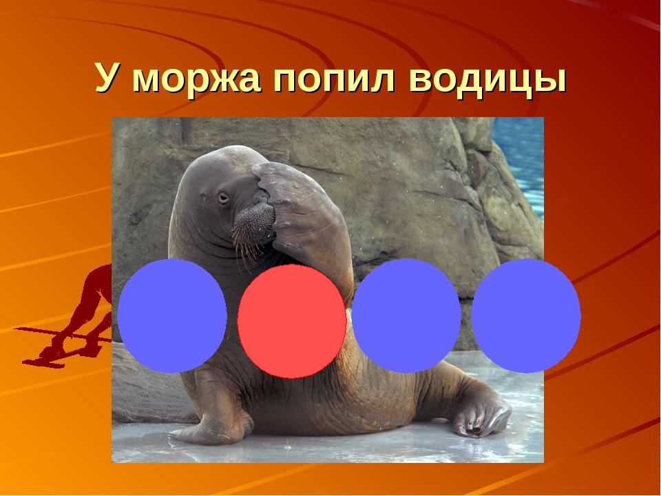 У моржа попил водицы