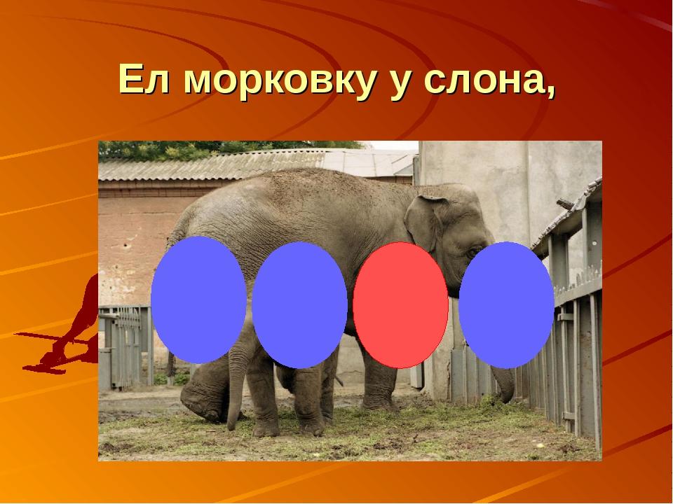 Ел морковку у слона,