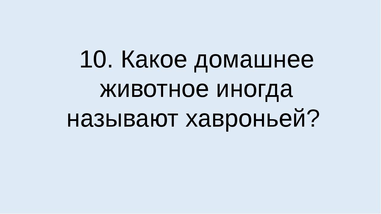 10. Какое домашнее животное иногда называют хавроньей?