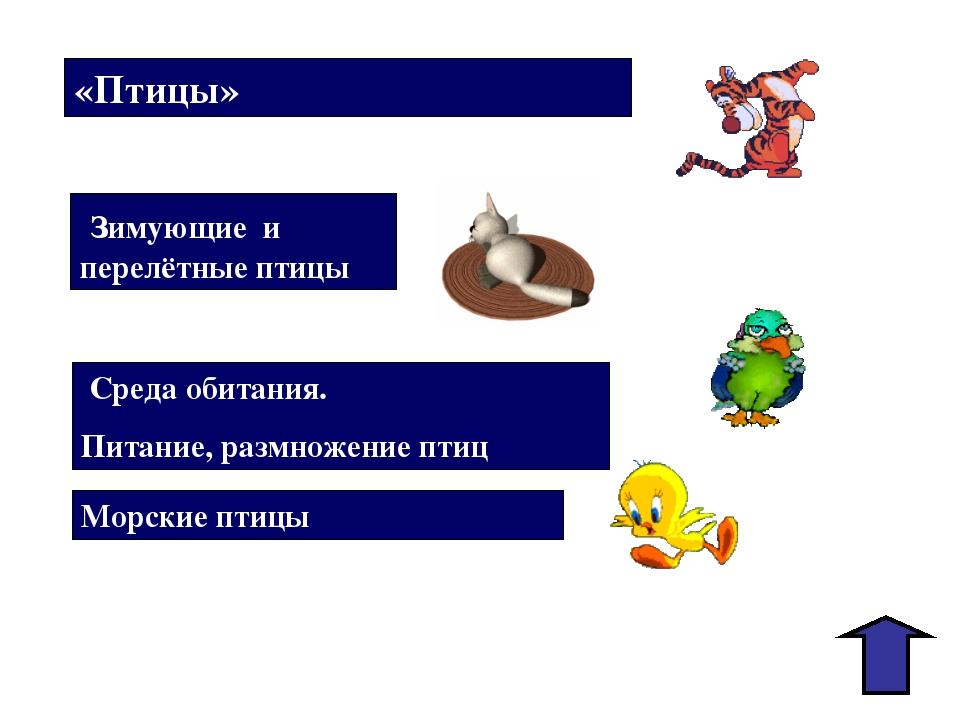 «Птицы» Зимующие и перелётные птицы Среда обитания. Питание, размножение птиц...