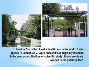 London Zoo is the oldest scientific zoo in the world. It was opened in London