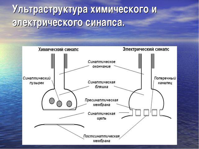 Ультраструктура химического и электрического синапса.