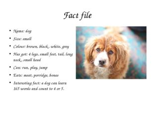 Fact file Name: dog Size: small Colour: brown, black, white, grey Has got: 4