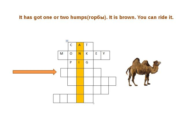 It has got one or two humps(горбы). It is brown. You can ride it.