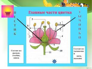 Работа учащихся в группах: 1) Решение биологических, экологических задач (при