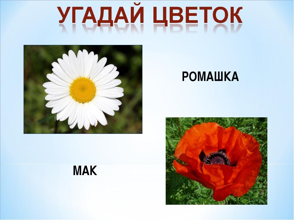 РОМАШКА МАК