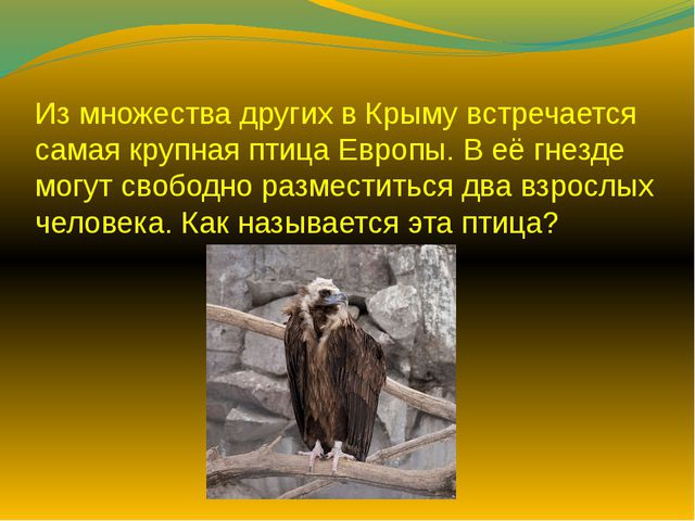 Из множества других в Крыму встречается самая крупная птица Европы. В её гнез...