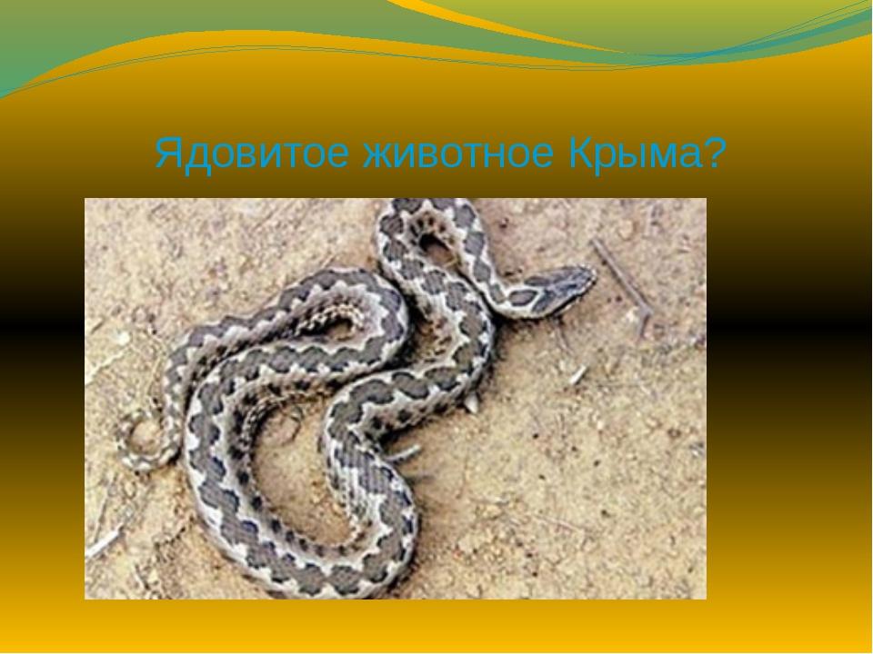 Ядовитое животное Крыма?