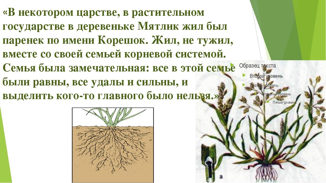 «В некотором царстве, в растительном государстве в деревеньке Мятлик жил был...