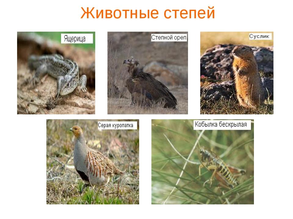 цвет растения и животные степи с картинками для