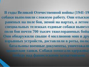 В годы Великой Отечественной войны (1941-1945) собаки выполняли сложную работ
