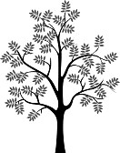 C:\Users\Ильмира\Desktop\19249456-black-tree-silhouette-isolated-on-white-background.jpg