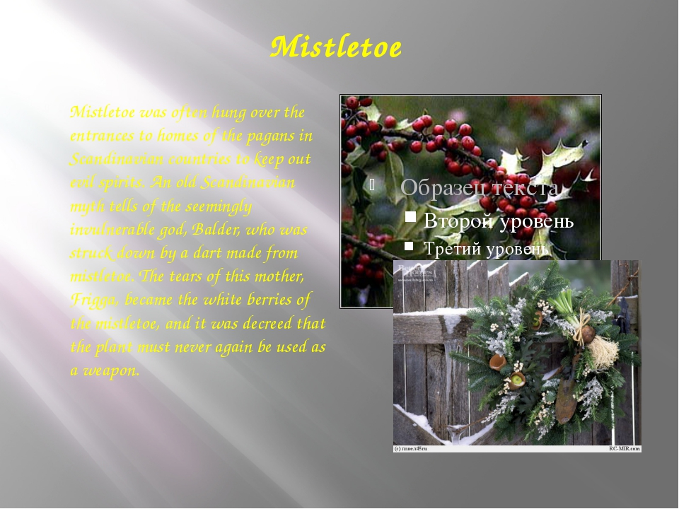 Mistletoe Mistletoe was often hung over the entrances to homes of the pagans...