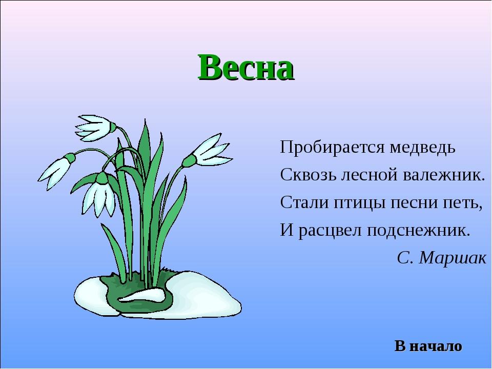 Весна Пробирается медведь Сквозь лесной валежник. Стали птицы песни петь, И р...