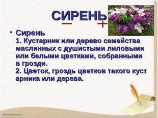 СИРЕНЬ Сирень 1.Кустарникилидеревосемейства маслинных с душистыми лиловым