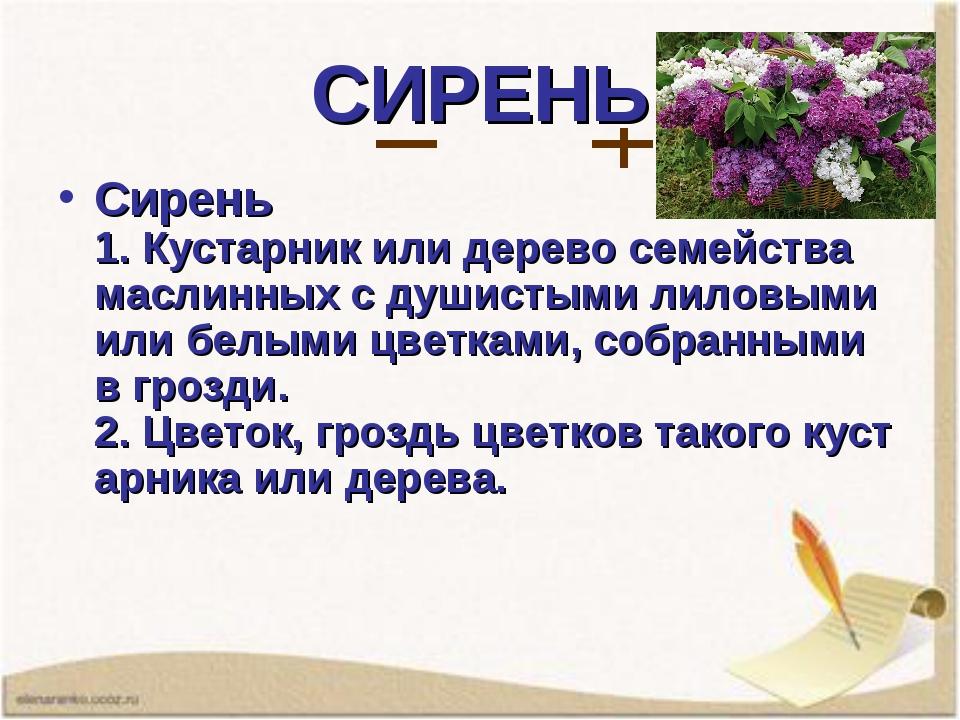 СИРЕНЬ Сирень 1.Кустарникилидеревосемейства маслинных с душистыми лиловым...
