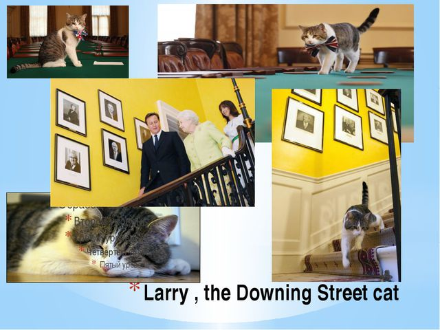 Larry , the Downing Street cat