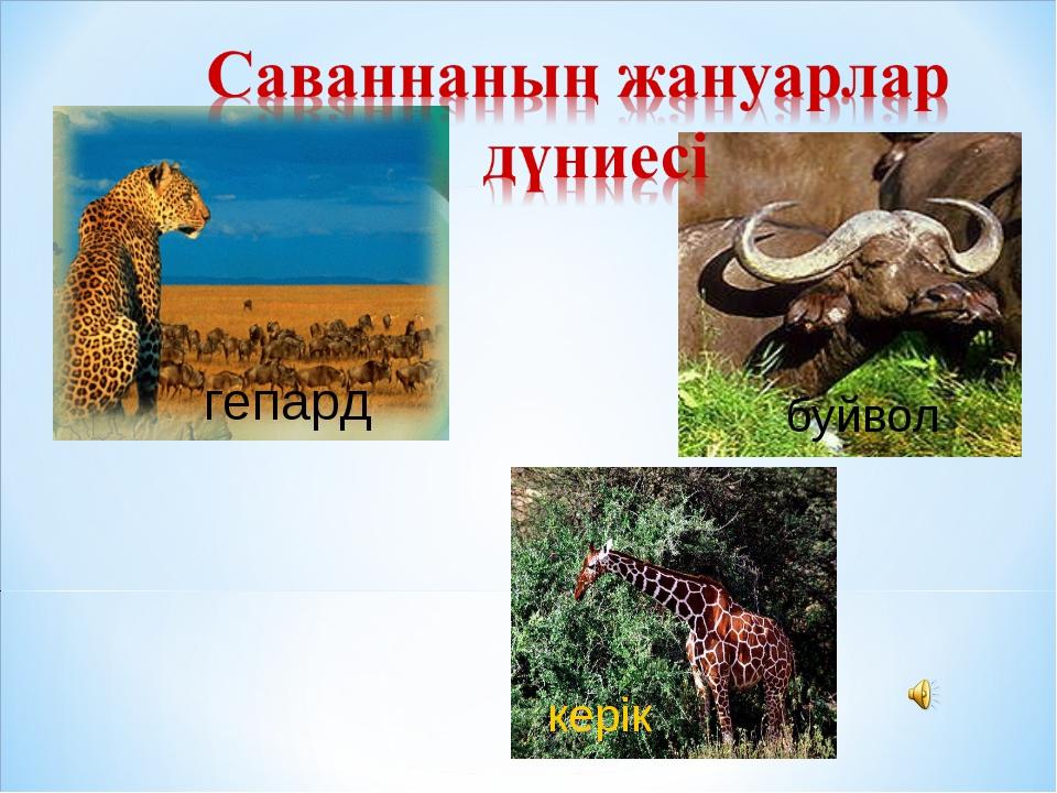 гепард буйвол керік
