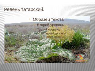 Ревень татарский.