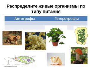 Распределите живые организмы по типу питания