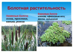 Болотная растительность Низинные болота: осока, тростник, камыш, рогоза Верхо