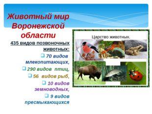 435 видов позвоночных животных: 70 видов млекопитающих, 290 видов птиц, 56 ви