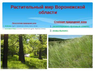 Растительный мир Воронежской области Лесостепная природная зона: 1. дубравы (