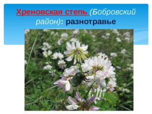Хреновская степь (Бобровский район): разнотравье