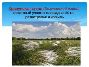 Хрипунская степь (Богучарский район): крохотный участок площадью 80 га – разн