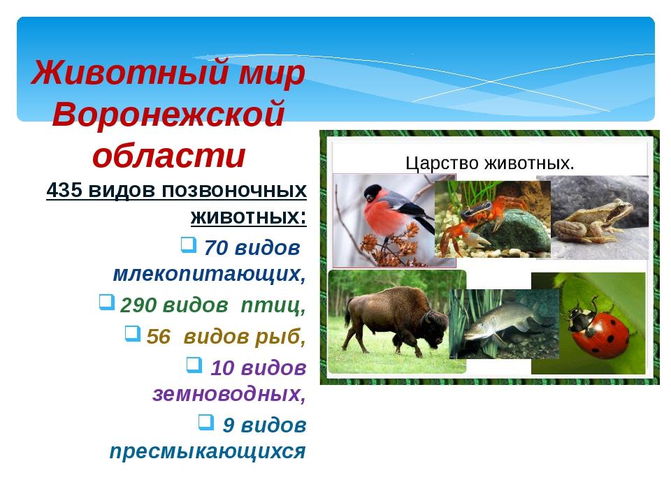 435 видов позвоночных животных: 70 видов млекопитающих, 290 видов птиц, 56 ви...