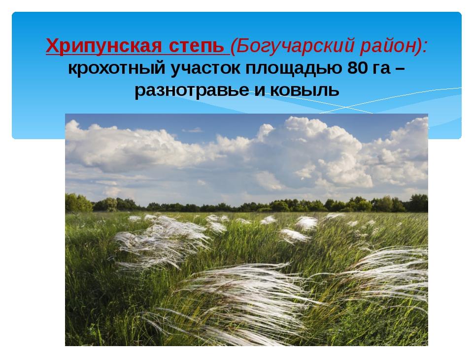 Хрипунская степь (Богучарский район): крохотный участок площадью 80 га – разн...