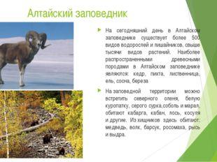 Алтайский заповедник На сегодняшний день в Алтайском заповеднике существует б