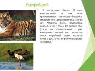 Уссурийский В заповеднике обитают 62 вида млекопитающих (в том числе краснокн