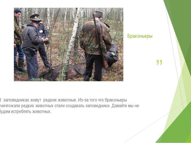 Браконьеры .. В заповедниках живут редкие животные. Из-за того что браконьеры...