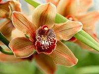 C:\Users\HP\Desktop\АРДАК\гулдер алемине саяхат\жас биолог\орхидея2.jpg