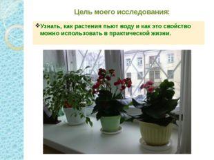 Цель моего исследования: Узнать, как растения пьют воду и как это свойство мо