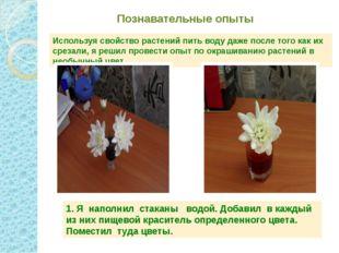 Познавательные опыты Используя свойство растений пить воду даже после того ка