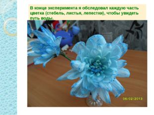 В конце эксперимента я обследовал каждую часть цветка (стебель, листья, лепес